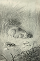 The Rabbit (1898) 'Here's one sitting'.png