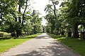 The main drive through Dunham Park (Dunham Massey) - geograph.org.uk - 447740.jpg