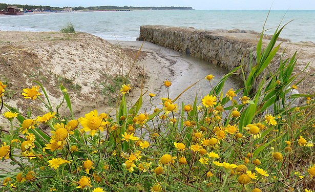 The mouth in the Tyrrhenian Sea of the water collection canal in Vada (Livorno).jpg