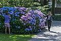 The same colours, Palace garden, The Hague (20175075595).jpg