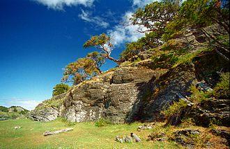 Magellanic subpolar forests - Harberton, Tierra del Fuego, Argentina.