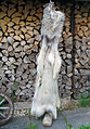 Timber wolf fur skin (belly side 1).jpg