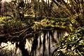Tintern stream - panoramio (1).jpg