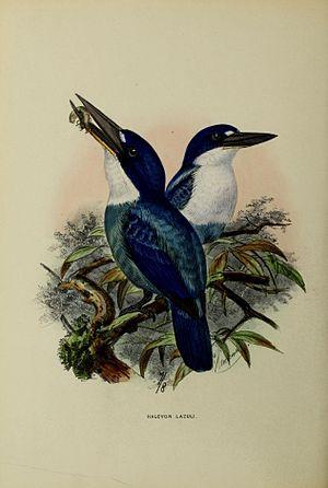 Lazuli kingfisher - Todiramphus lazuli by John Gerrard Keulemans