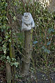 Top cat on the tree stump (5695284511).jpg