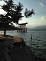 Torii of Itsukushima Shrine and deers of Miyajima Island.jpg