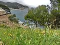 Tossa De Mar - panoramio (42).jpg