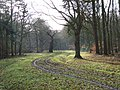 Track in Holliday's Plain, Windsor Forest - geograph.org.uk - 110805.jpg