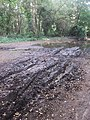 Track on East Budleigh Common after a Wet Summer - geograph.org.uk - 977653.jpg