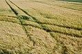 Tracks in Farmland (Unsplash).jpg
