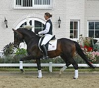 Trakehner riding stallion, Neumünster auction 2004.jpg