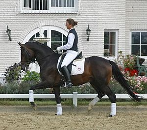 Trakehner stallion, born 2000, by Tambour out ...