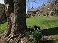 Tree, Coleton Fishacre - geograph.org.uk - 1189836.jpg