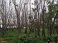 Trees enjoying cool wind coming from lake1.jpg
