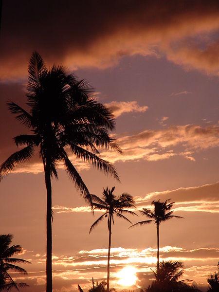 File:Tropical Fantasy 2.JPG