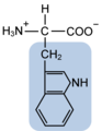 Tryptophan w functional group highlighted.png