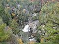 Tsuga caroliniana Linville Falls 2.jpg