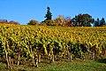 Tualatin Estates Vineyards (Washington County, Oregon scenic images) (washDA0066).jpg