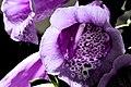 U.S. Botanic Garden in April (23364899573).jpg
