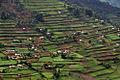 Uganda landscape3 lo.jpg