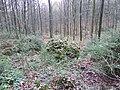 Vaals-Geologisch monument Sterrenstenen Vijlenerbosch (4).JPG
