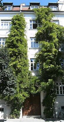 Kletterpflanze Wikipedia