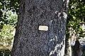 Viggiù - Cimitero vecchio 1110.JPG