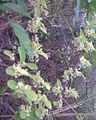 Vilangan Kunnu Image172.jpg