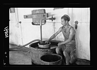 Vintage activities at Richon-le-Zion, Aug. 1939. Red grape juice flowing into strainer from where it is pumped LOC matpc.19789.jpg