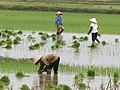 Vn-haiphong-reis-02-08-07.jpg