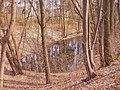 Volkspark Rehberge - Entenpfuhl (Duck Pond) - geo.hlipp.de - 34999.jpg