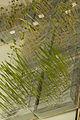 Vue d'ensemble de semences sur papier plissé 21-cliche Jean Weber (2) (23594101521).jpg