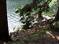 Vylet k Cernemu jezeru Sumava - 9.srpna 2010 197.JPG