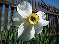 WILCZE ŁUGI wiosna 12 - panoramio.jpg