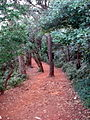 Walk to point matheran.jpg