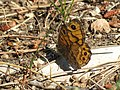 Wall Brown (32978470533).jpg