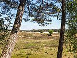 Wandeling over het Hulshorsterzand-Hulshorsterheide 10.jpg