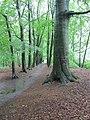 Wandelpark Oosterbos (31062418670).jpg