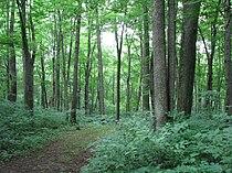 Warriors Path State Park.jpg