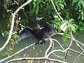 Water Crow.jpg