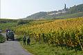 Weinlese Niederwalddenkmal Rüdesheim.jpg