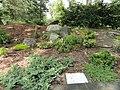 Wellesley College Botanic Gardens - DSC09707.JPG