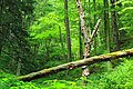 West Branch Research and Demonstration Forest (22) (27991070932).jpg
