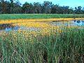 Wetlands kowanyama.jpg