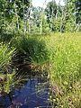 Wetlands near Darány sl7.jpg