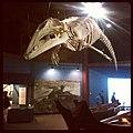 Whale skeleton at Makah Museum.jpg