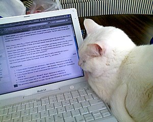 White cat watching Wikipedia.jpg