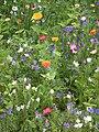 Wiese mit Blumen HD.JPG