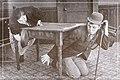 Willie Whipple's Dream 1915.jpg