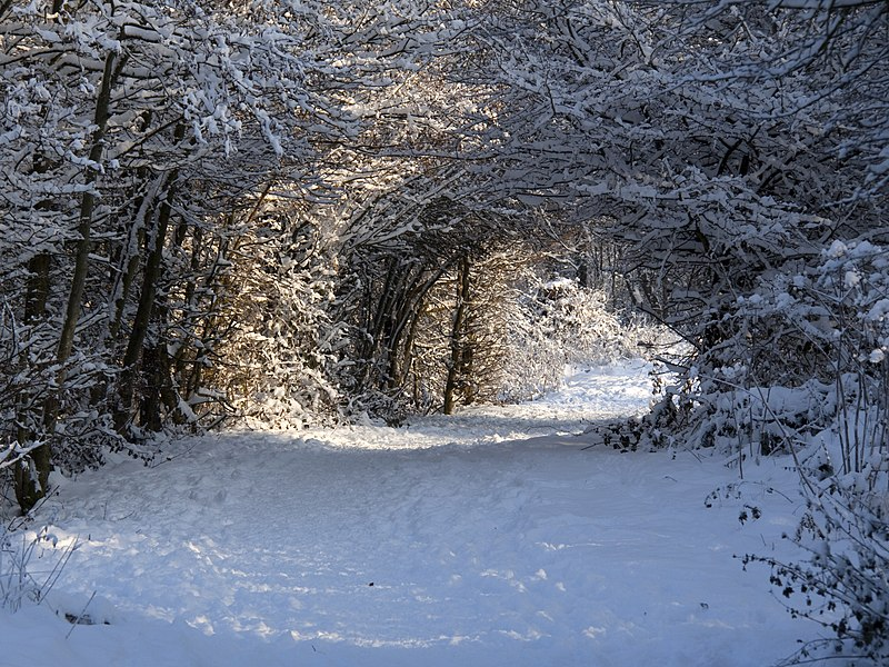 File:Winter Path (5274594404).jpg